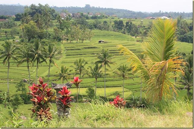 Bali2009_556