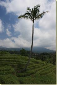 Bali2009_560